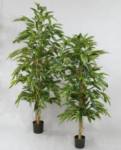 Longifolia 170 cm Rak - Longifolia 170 cm Rak