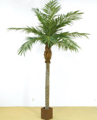 Majesty Palm Höjd 400 cm