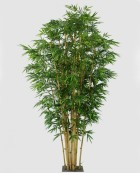 New Bamboo 200cm