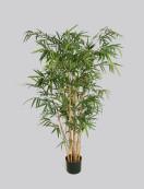 New Bamboo 135cm