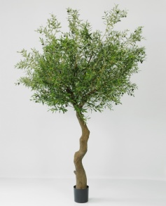 Olivetree 320 cm - Olivetree 320 cm