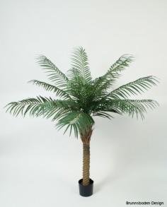 Phoenixpalm 150 cm - Phoenixpalm 150 cm