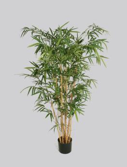 New Bamboo 135cm - New Bamboo 135cm