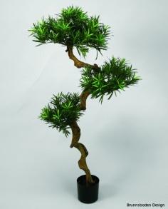 Podocarpus 135cm - Podocarpus 135cm