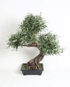 Bonzai Olive 85 cm