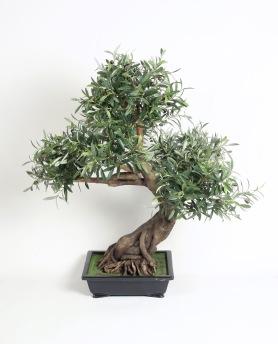 Bonzai Olive 85 cm - Bonzai Olive 85 cm