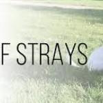 bff strays