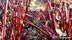 Tångagård ekologiskt odlade rödbetor gårdsbutik och självplock