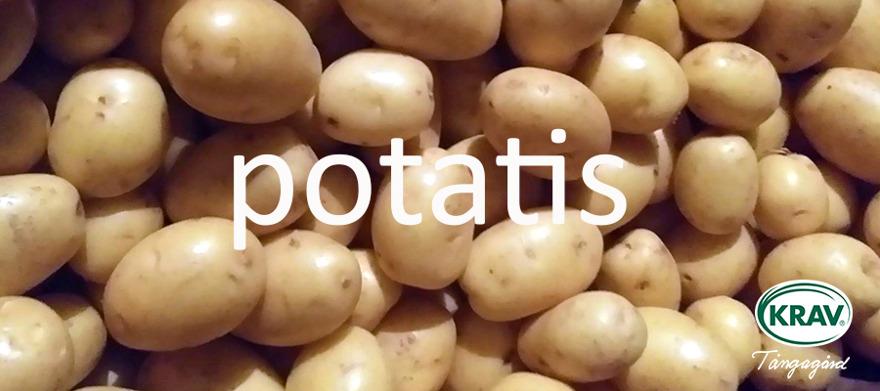 Ekologiskt odlad potatis Halland - KRAV-certifierad odlare Tångagård mellan Falkenberg, Varberg & Ullared