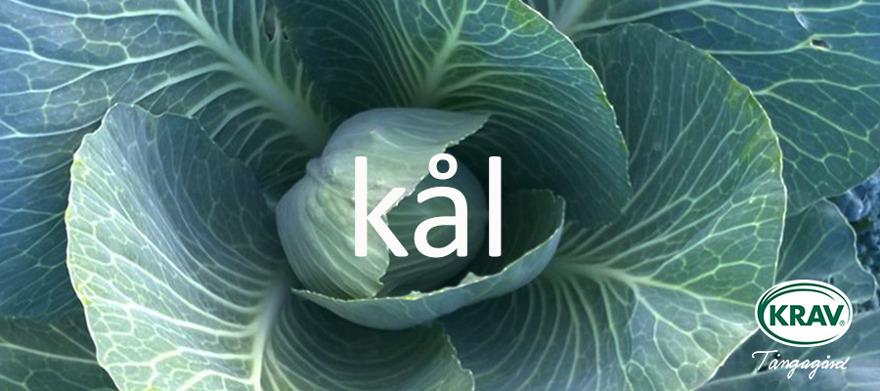 Ekologiskt odlad kål KRAV-certifierad Halländsk odare & leverantör av grönkål. blomkål, vitkål, savoykål, rödkål mm