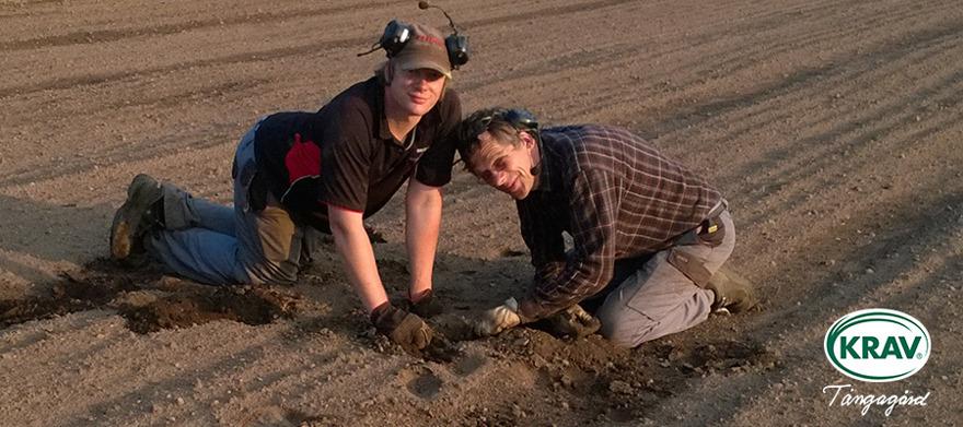 Hitta ekologisk odlare Tångagård i Falkenberg. KRAV-certiferad odlare mitt i Halland