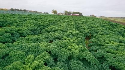 Självplock Falkenberg på ekologiska KRAV-odlade grösaker & rotfrukter. Tångagård, Halland