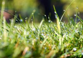 Beställa gräs på rulle
