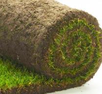 Gräsmatta på små rullar