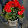 Växterdec17 006