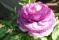 Våröppningsbilder 056