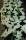 Växterdec17 021