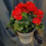 Växterdec17 007