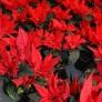 Växterdec17 015