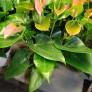 Växterdec17 018