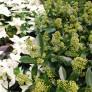 Växterdec17 010