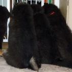 four puppies P1550439