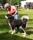 Orvar in ring P1570688