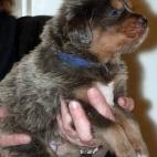 Daalia puppy  P1630527