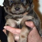 Daalia puppy  P1630533