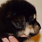 Daalia puppy  P1630549
