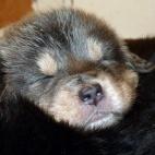 Daalia puppy  P1630581