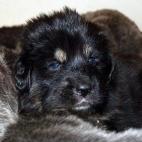 Daalia puppy  P1630600