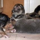 Daalia puppy P1630460