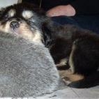 Daalia puppy P1630572