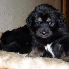 Freja puppy P1630391