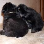 Freja puppy P1630401