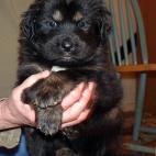 Freja puppy P1630404