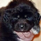 Freja puppy P1630417
