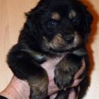 Freja puppy P1630427
