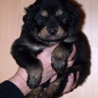 Freja puppy P1630428