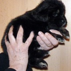 Freja puppy P1630431
