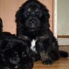 Freja puppy P1630446