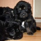 Freja puppy P1630447