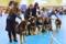 Uppfödargrupp Mimayin vid utställning i Vilsta 1 april 2017