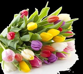 Blommor - Tulpaner 10-pack