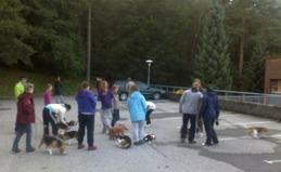 Beagler i Langeskogen