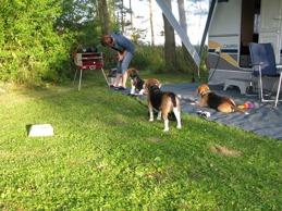 Beagler på grillkurs