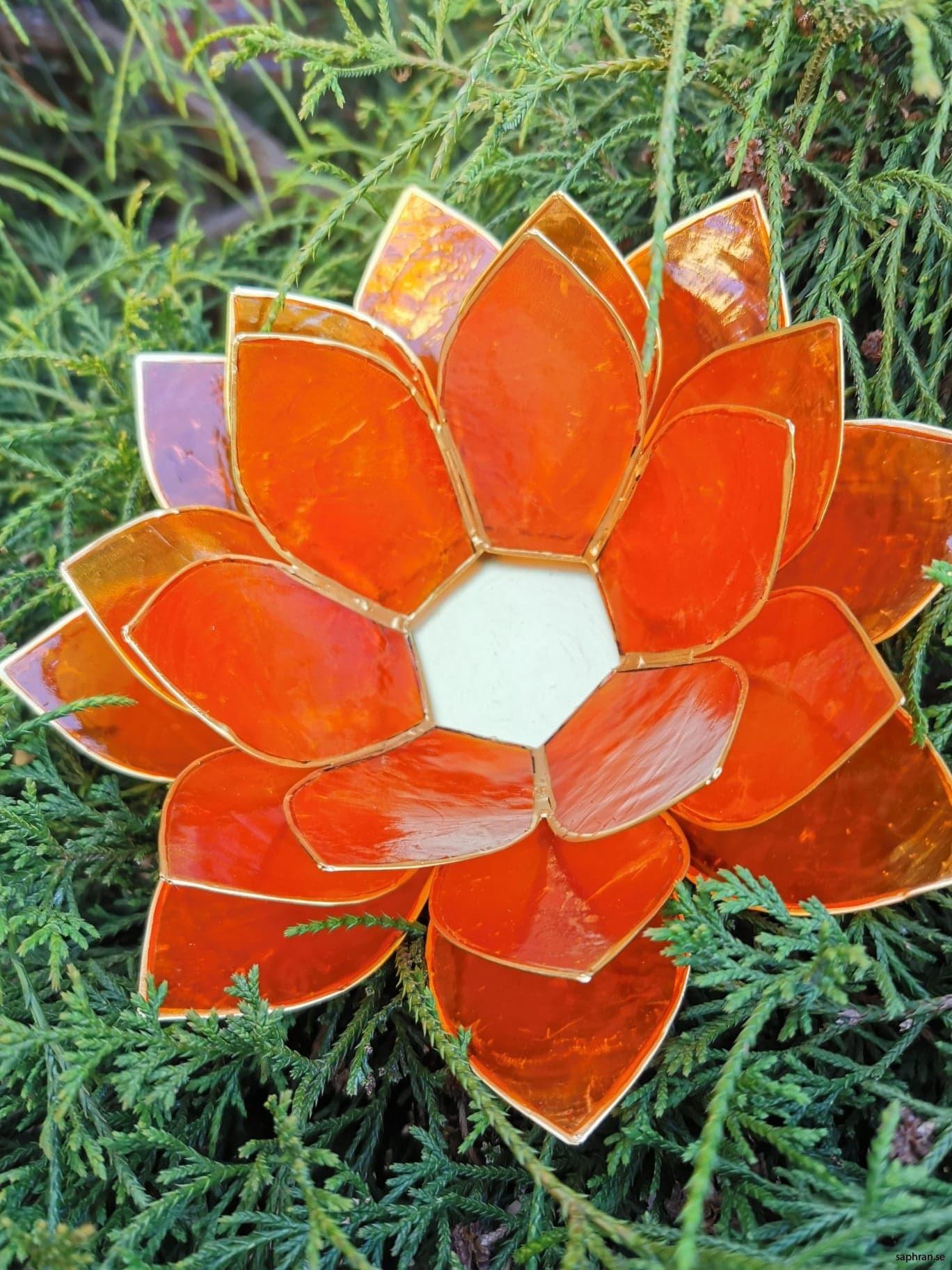 Stor Lotuslykta orange
