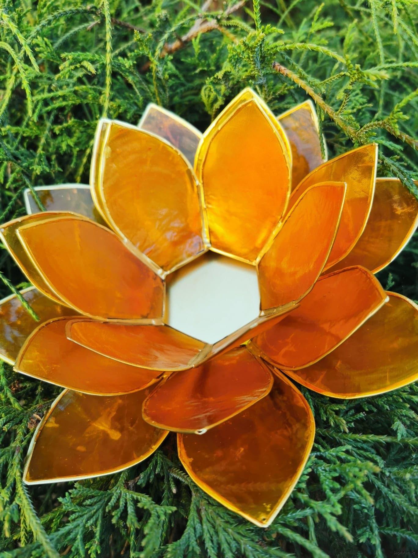 Stor Lotuslykta gul