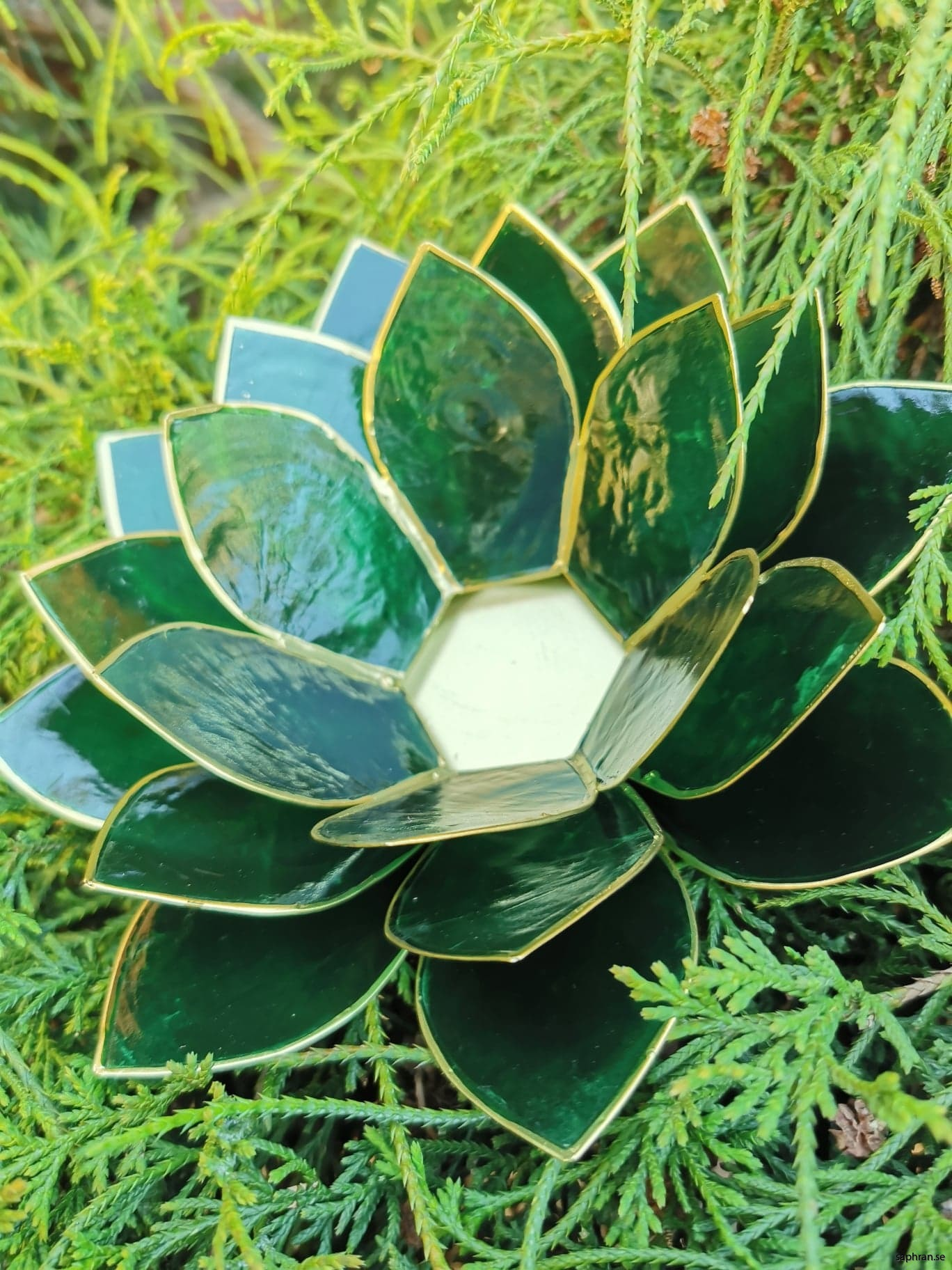 Stor Lotuslykta grön